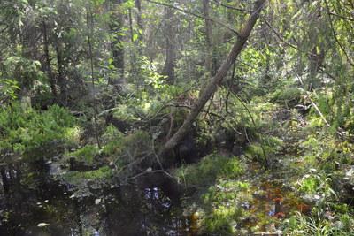 Rezerwat przyrody Smolnik, autor: Dorota Twardzik