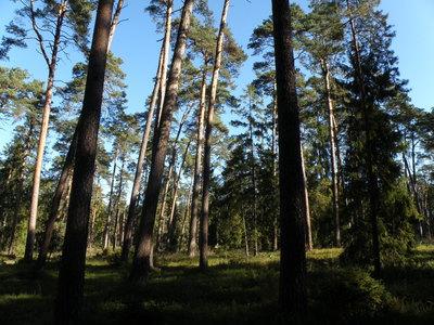 drzewostan rezerwatu przyrody Blok, źródło: RDOŚ Opole