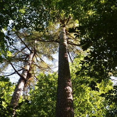 drzewostan rezerwatu, autor: Dorota Twardzik